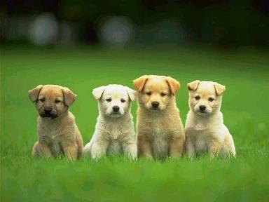 nomes de cachorros pequenos