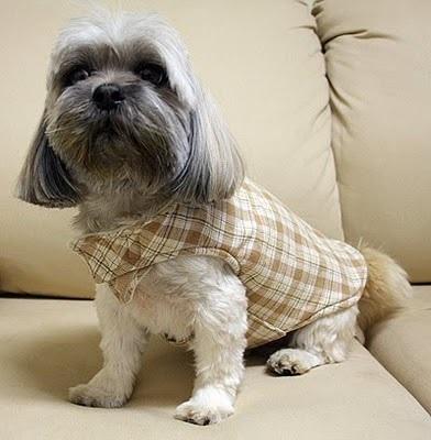 roupa de cachorro de inverno - roupa de cachorro frio