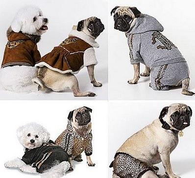 roupa de cachorro pequeno