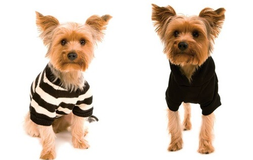 roupas de cachorro macho