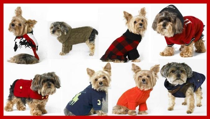 roupas de cachorros